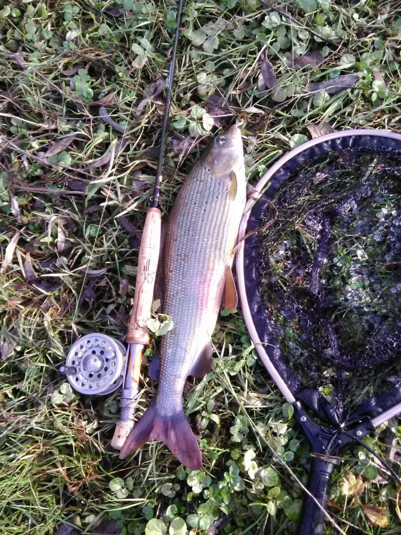 "Flyfishing at ""Ribnik"""