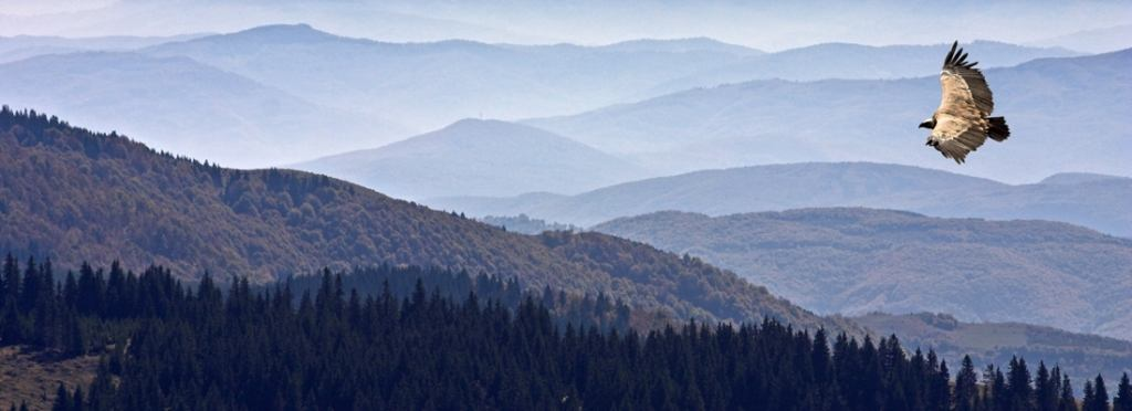 Adventures on the Golija mountain... Serbia