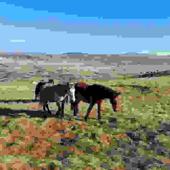 Wild horses, Livno Borova glava & Kruzi, Livno, Bosnia and Herzegovina