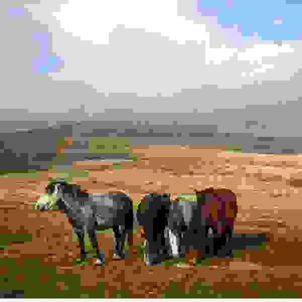 Wild horses - Kruge Cincar